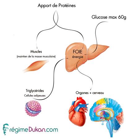 schéma protéine Dukan