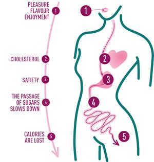 диета французского диетолога дюкана